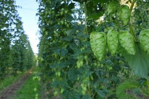 American Beer Style Guide Recognises Kiwi Hops